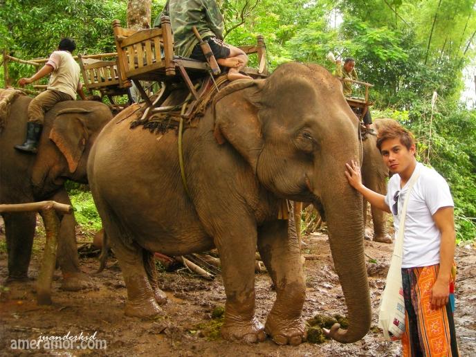luang elephant
